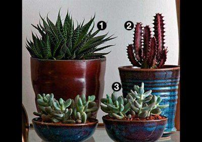 5 Plantas que vão bem dentro de casa