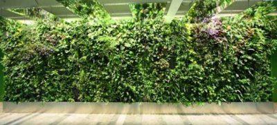 Tenha um Jardim Vertical de baixo custo