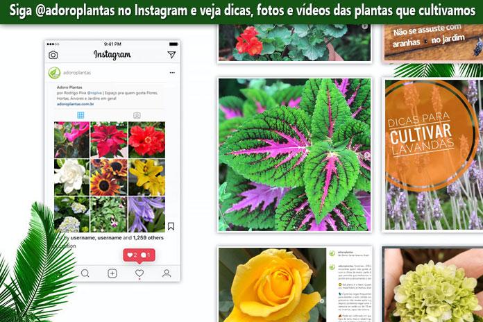 Adoro Plantas no Instagram